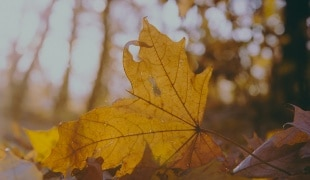 Picture of leaves